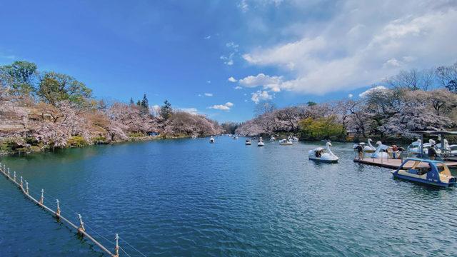 2020年の吉祥寺・井の頭公園の桜